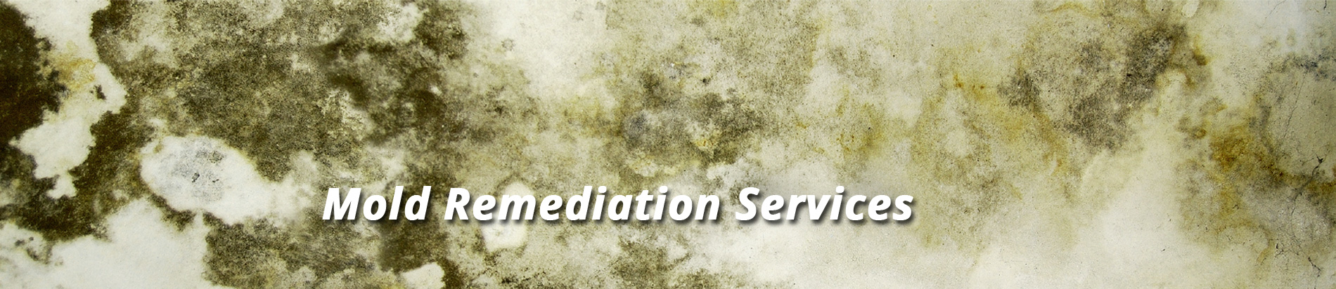 Mold-Remediation-banner